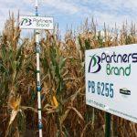 PB 6255 Seed Corn