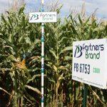 PB 6753 Seed Corn