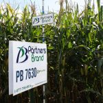 PB 7630 High Oil Corn