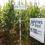 PB 7830 High Oil Corn