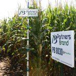 PB 8030 High Oil Corn