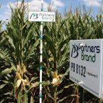 PB 8132 Seed Corn