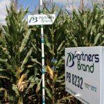 PB 8232 Seed Corn