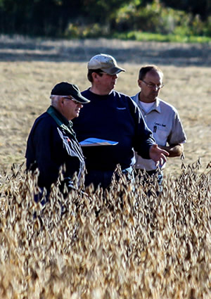 Farmers evaluating a soybean field.