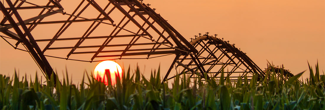 Sunset over seed corn © Keith James