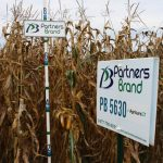 PB 5630 Seed Corn, Agrisure GT
