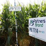 PB 7714 Seed Corn