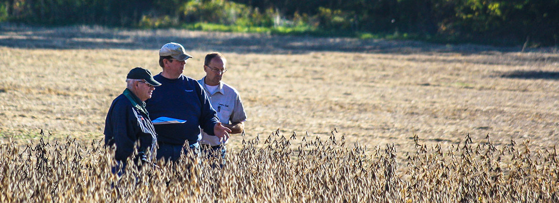 Farmers surveying soybeans